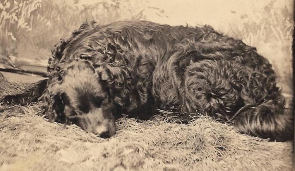 Two 19th century photographs of the same dog
