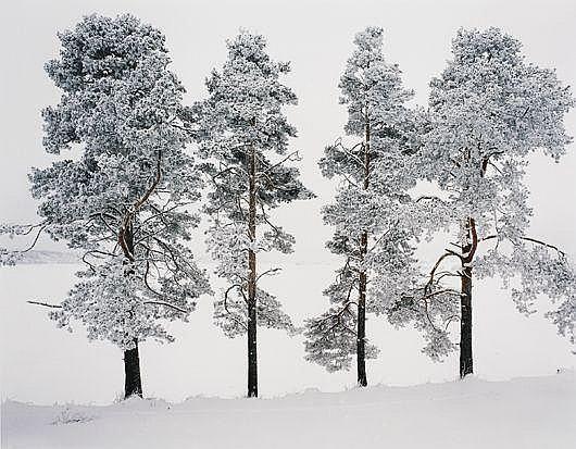 Four Trees, Ferrapontou, Russia, 2004