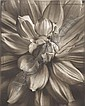 Photographs: TOM BARIL Ten Flowers in Photogravure, Tom Baril, Click for value