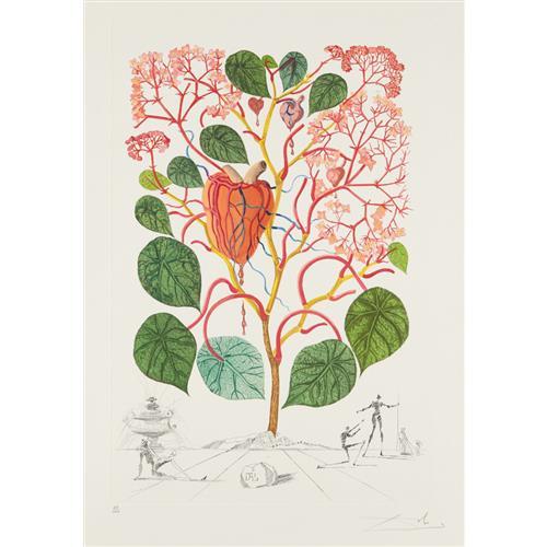 SALVADOR DALÍ - Begonia (Anacardium recordans), from Flordali® (Flora Dalinae), 1968