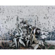 EILEEN QUINLAN - After Winter