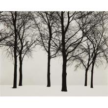 HARRY CALLAHAN - Chicago (Trees in Snow), 1950