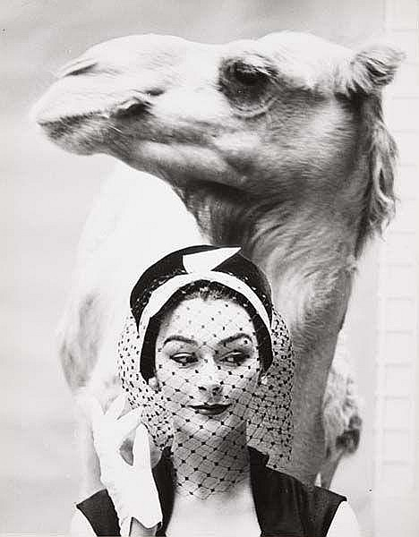 Model with Camel, 1950s