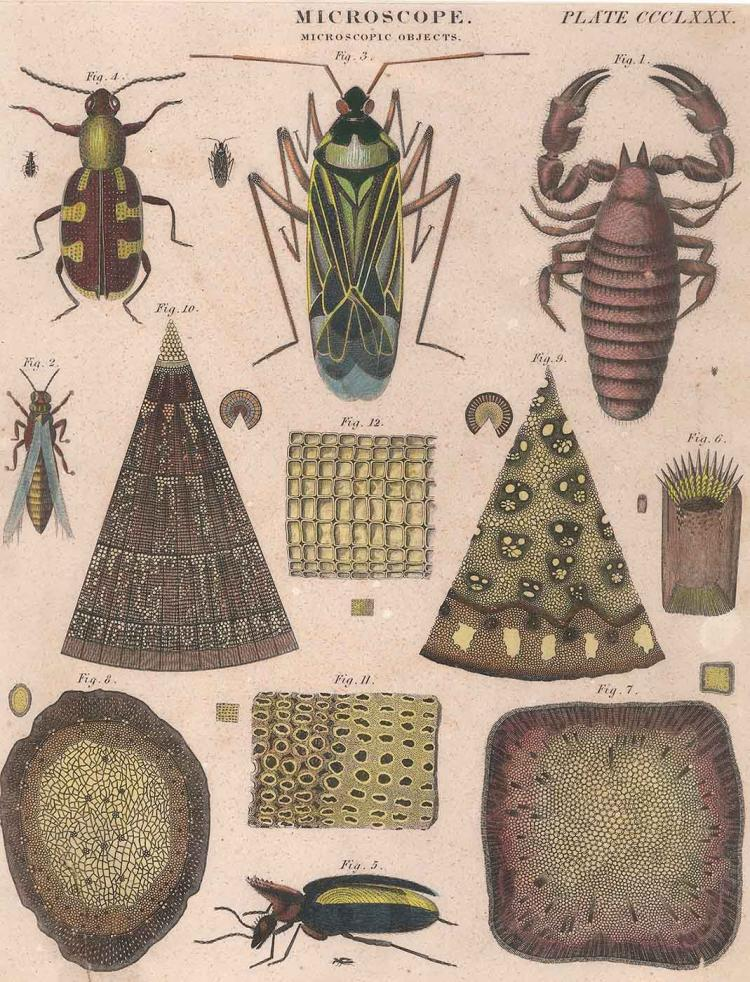 Insects Under the Microscope