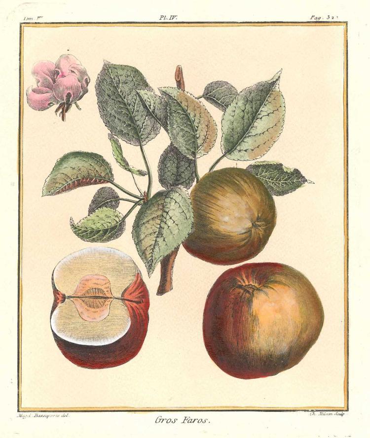 Gros Faros Apples
