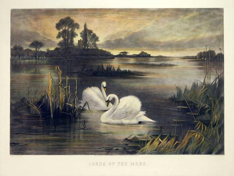 Two Swans at Dusk