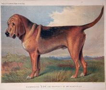 Don the Famous Bloodhound