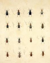 Assortment of 16 Beetles