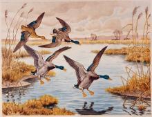 Four Landing Ducks