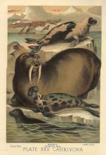 Three Seals and A Walrus