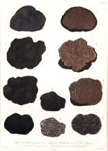 Guide to French Truffles