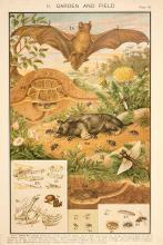 The Noctule Bat & Fellow Creatures