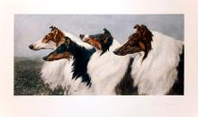 Engraving of Four Russian Wolfhounds