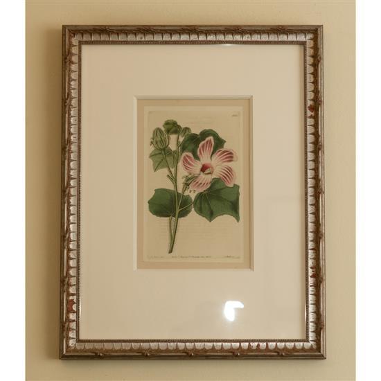 Cinq estampes de fleurs, 46x36 cm 5 litografias flores