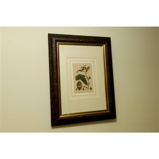 Deux estampes, Planche de Botanique, 64x49 cmPareja de grabados de botánica