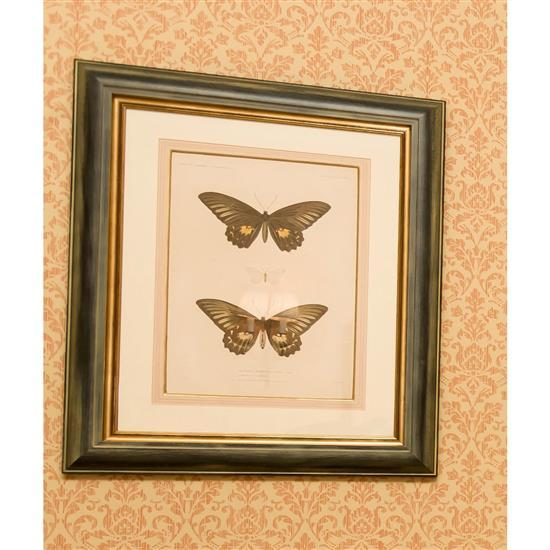 Deux estampes papillons et une gravure représentant le connétable de Castille2 estampas de mariposas