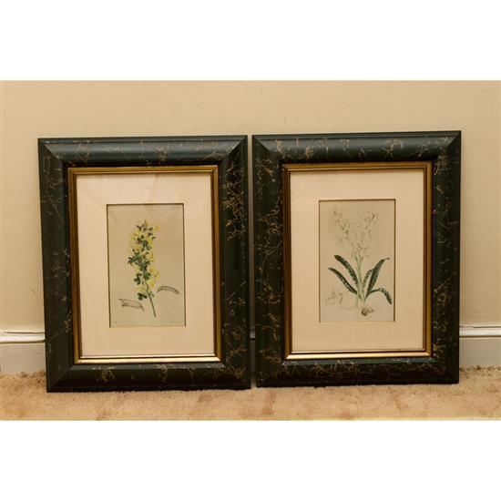 Deux gravures oiseaux 67x59 cm à vue et Deux gravures planches botaniques 50x40 cmLote de 4 grabados, dos botanicos y dos de pájaros