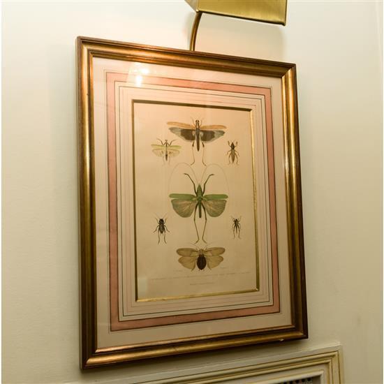 Estampe, Papillons, 50x40 cmGrabado de insectos