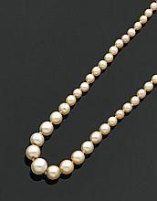 Collier de petites perles fines et de culture en chute, le fermoir