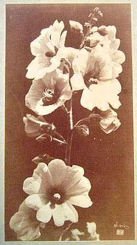 Photographs:  Charles Hippolyte AUBRY (1811-1877)
