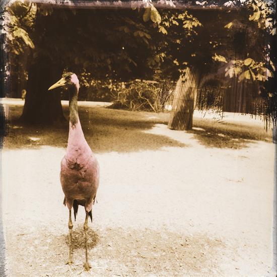 Jonathan Abbou (1967)Sans titre, Oiseau