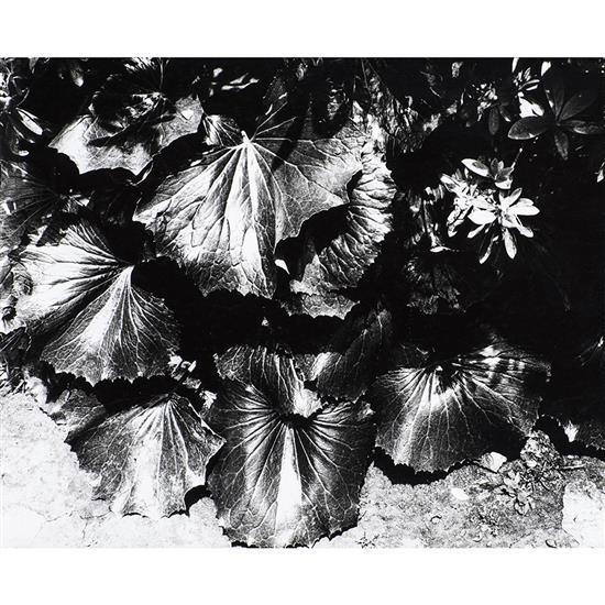 Daido Moriyama (1938) Sans titre, 1980, de la série Light and shadow