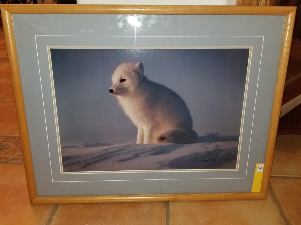 """First Rays - Artic Fox"" Professionally Photograph by Thomas D. Mangelsen"