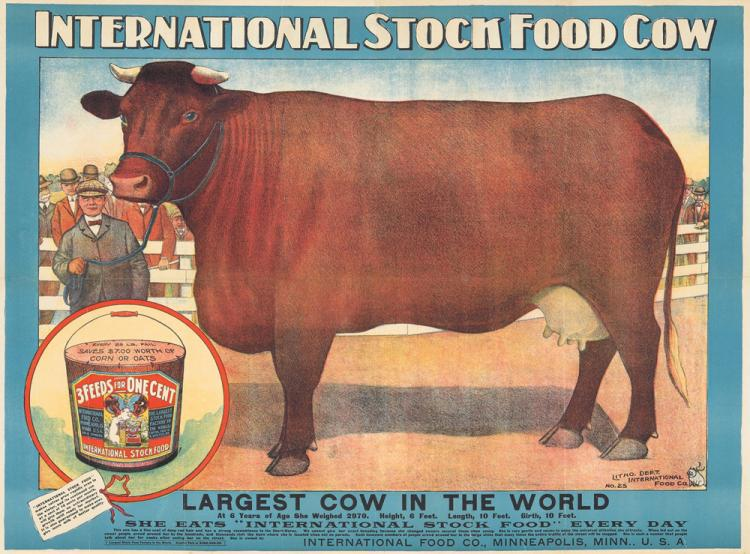 International Stock Food Cow. ca. 1905