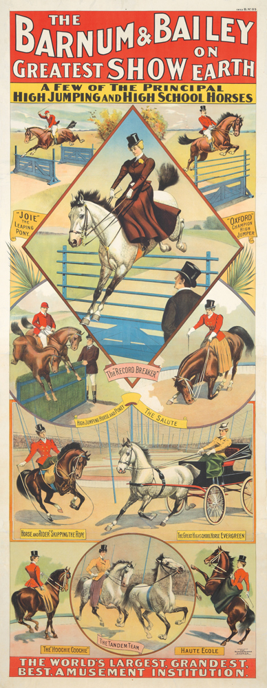 Barnum & Bailey / High School Horses. 1900
