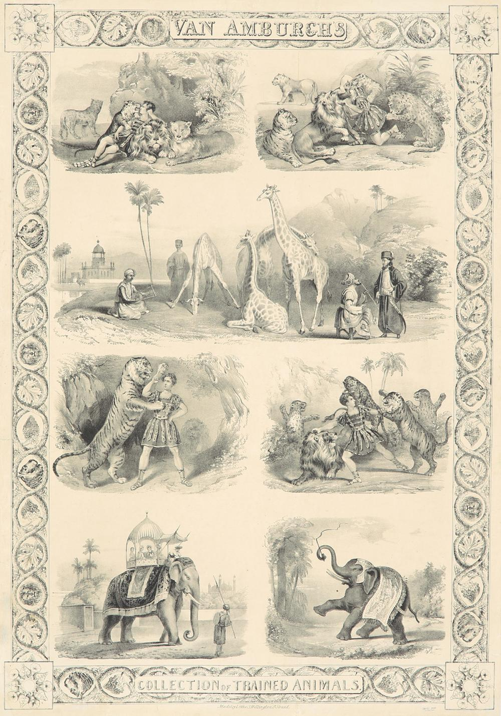 Van Amburgh's / Collection of Trained Animals. ca. 1845.