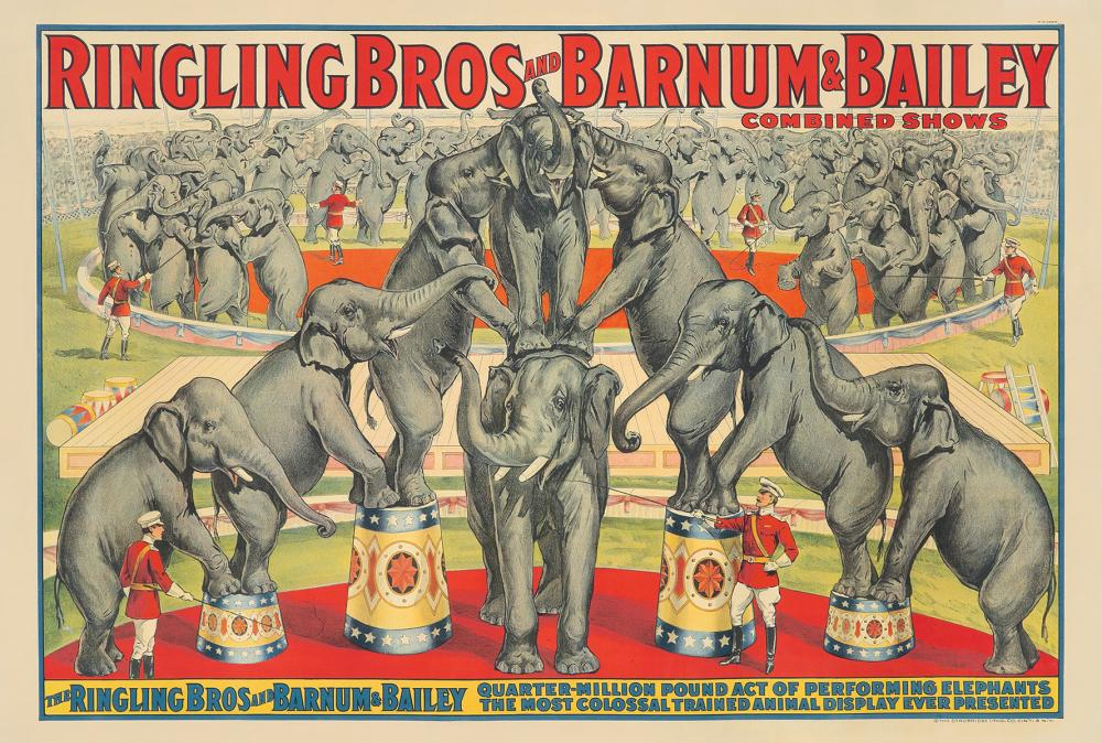 Ringling Brothers and Barnum & Bailey / Performing Elephants.