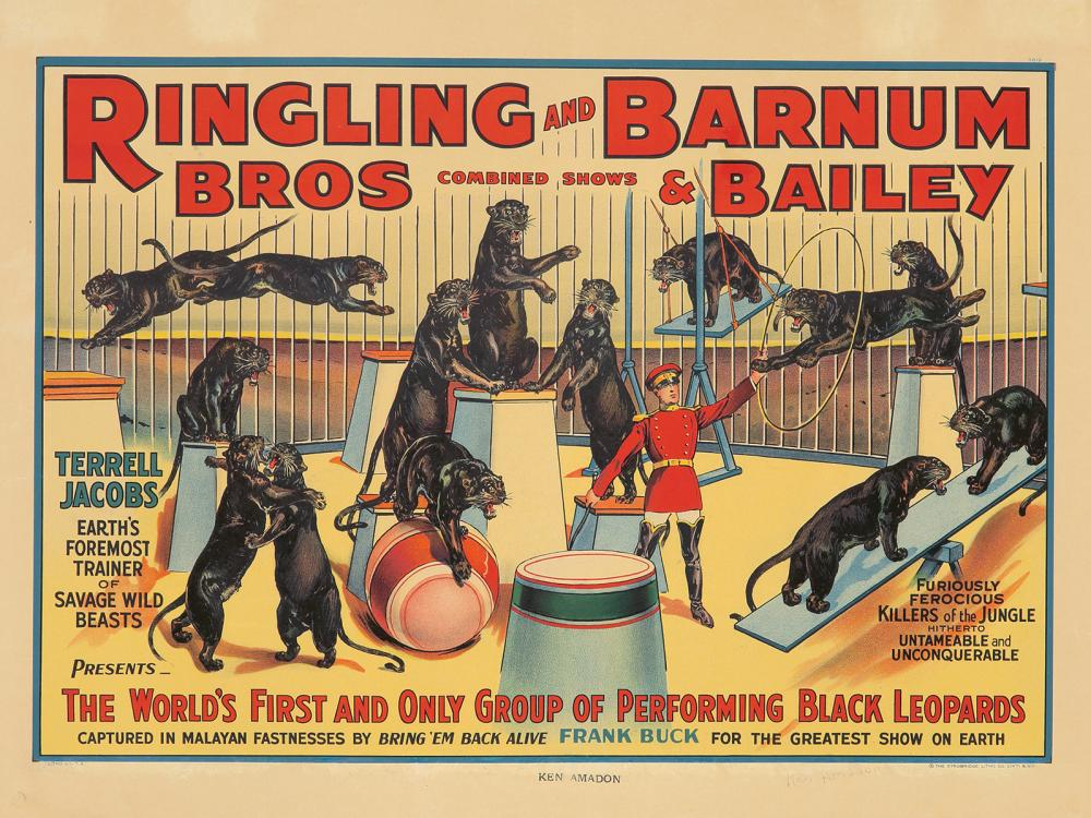Ringling Brothers and Barnum & Bailey Circus / Black Leopards. 1938.