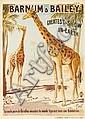 Barnum & Bailey / Girafes Vivantes.