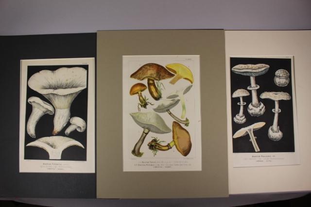 Three H. Furrer Lithograph Prints after F. Leuba