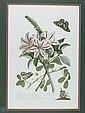 G. D. Ehret Floral Print