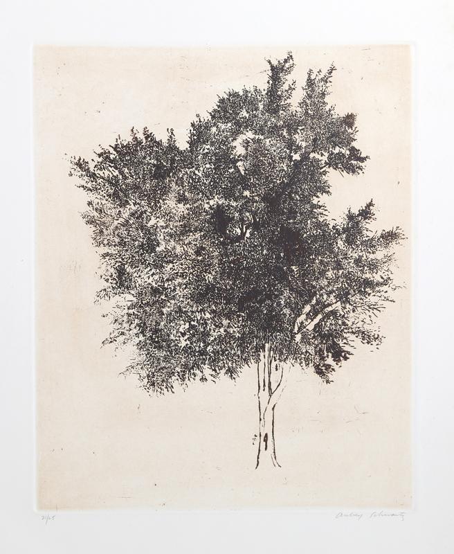 Aubrey Schwartz, Tree, Etching