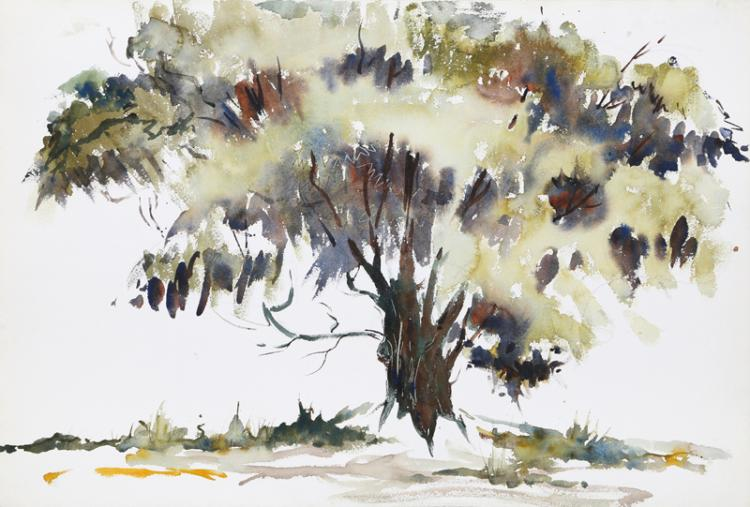 Eve Nethercott, Tree (P1.31), Watercolor Painting