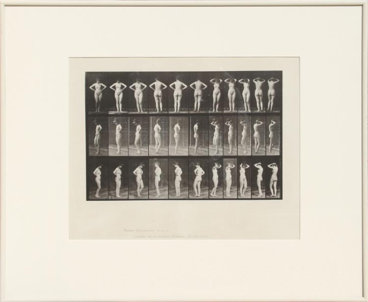 Eadweard Muybridge, Animal Locomotion, plate 531, Collotype