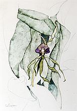 Carl Bergman, Purple Petunia, Watercolor