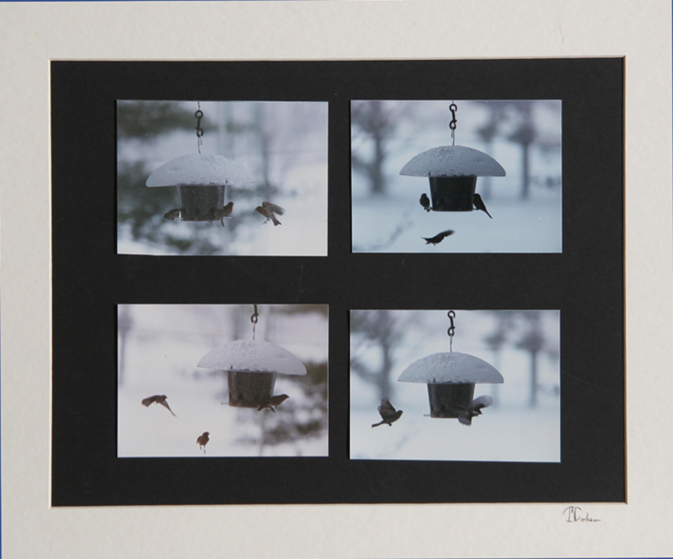 Theodore Cohen, Winter Birdhouse Study, Photograph