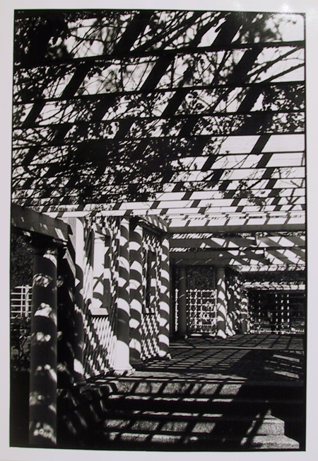 Georgeen Comerford, Backyard Shadows, Photograph