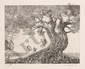 Hans Georg Rauch, Butterflies, Etching with Aquatint, Hans Georg Rauch, Click for value