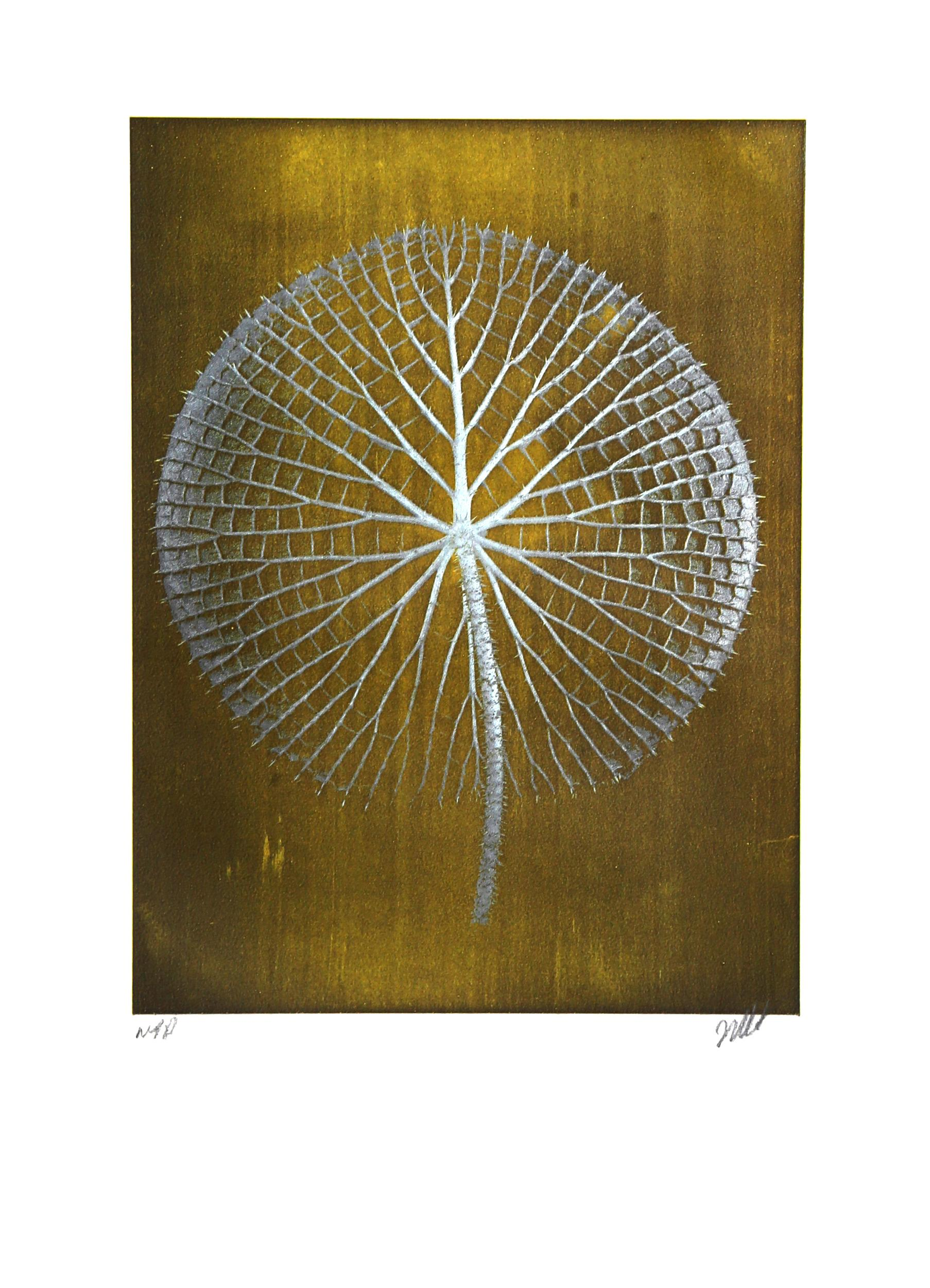 Jonathan Singer, Giant White Amazon Waterlily on Gold, Digital Photograph