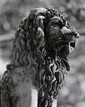 Theodore Cohen, Lion Sculpture, Photograph, Theodore Cohen, Click for value