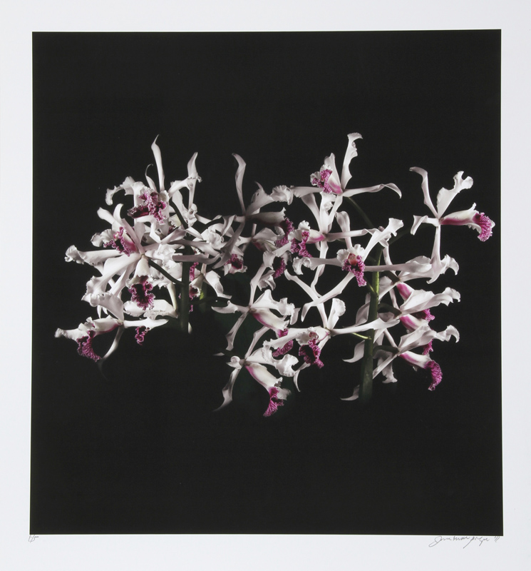 Jonathan Singer, White Purple (Tube Flowers), Digital Photo