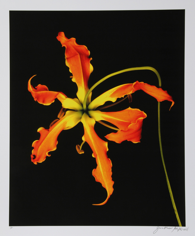 Jonathan Singer, Orange Flower Unique, Digital Photograph