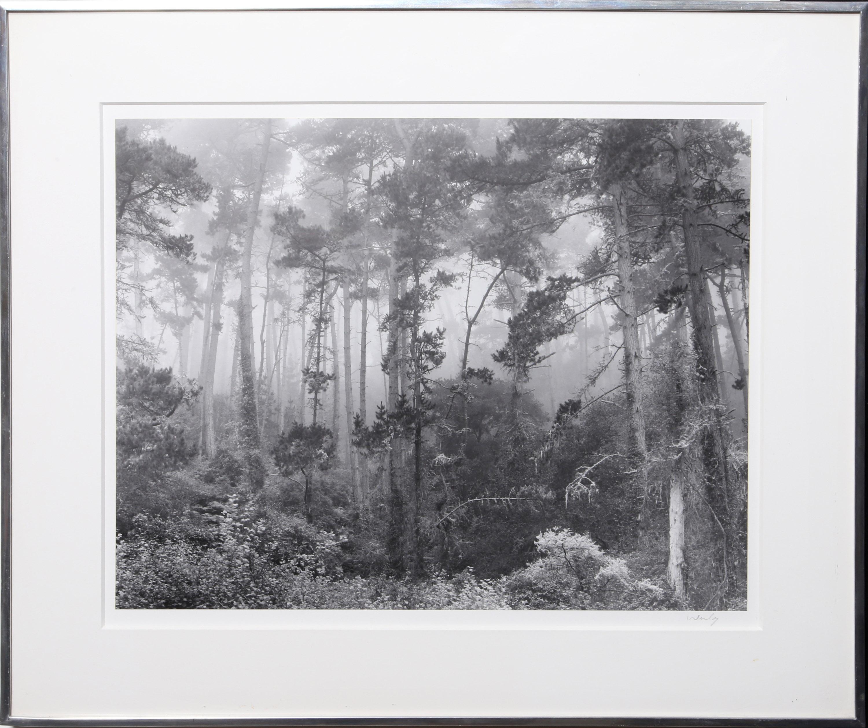 Robert Werling, Pines in Fog, Gelatin Silver Print