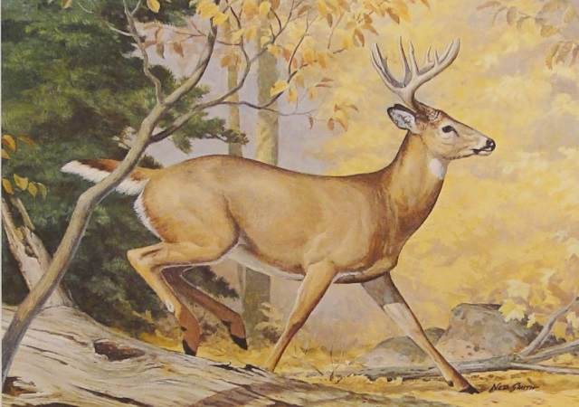 Ned Smith 1981 Pa Conservation Whitetail Deer Print & Stamp