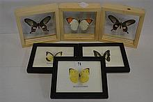 SIX FRAMED AND LABELLED BUTTERFLIES.