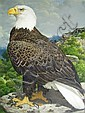 AXEL AMUCHASTEGUI 1921-2002 'Bald-Headed Eagle' Watercolour., Axel Amuchastegui, Click for value